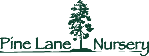 Pine-Lane_Nursery-logo-300